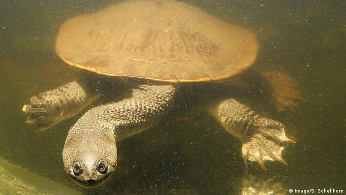 The weird and wonderful world of turtles   All media content