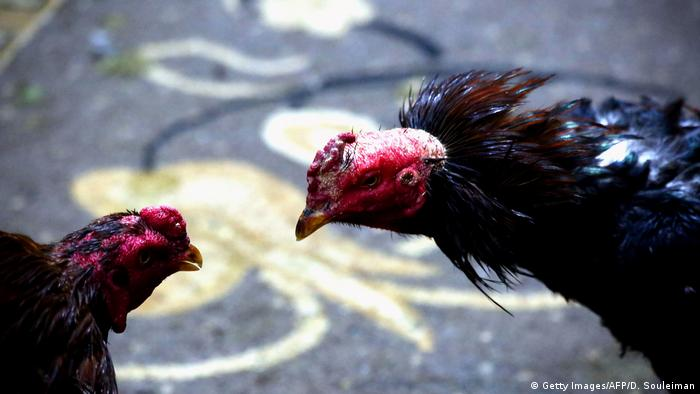 Syrien Hahnenkämpfe im Norden