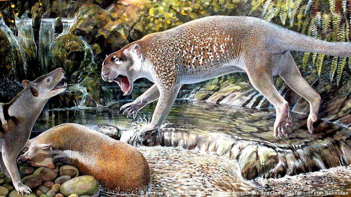 10 neue Spezies Beutelöwe «Wakaleo schouteni» (picture-alliance/ESF International Institute for Species Exploration/Peter Schouten)