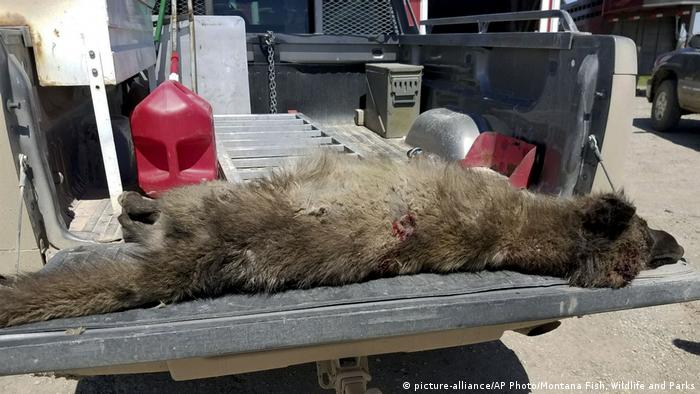 Unidentifiable Wolflike Creature Killed By Rancher In Montana