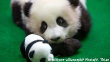 A baby panda makes her public debut at a zoo in Kuala Lumpur, Malaysia (picture-alliance/AP Photo/V. Thian)