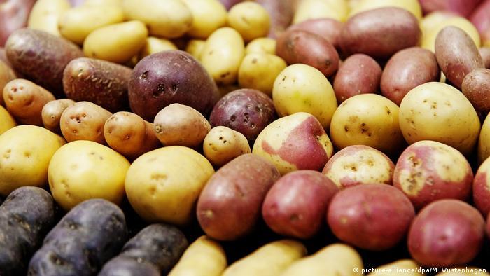Las papas, el arroz y el trigo serían los cultivos de alimentos básicos más afectados por el calentamiento global.