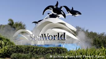USA Themenparks | Sea World (picture-alliance/AP Photo/J. Raoux)