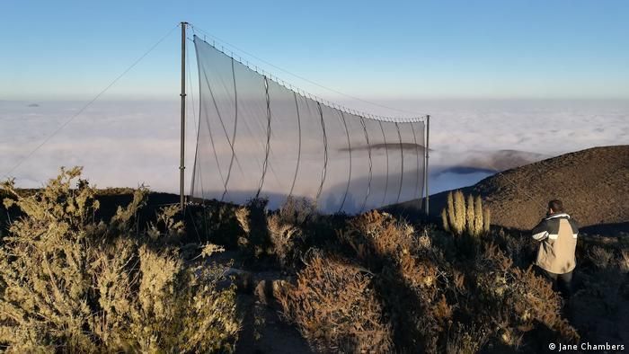 A fog-catching net in northern Chile (Jane Chambers)
