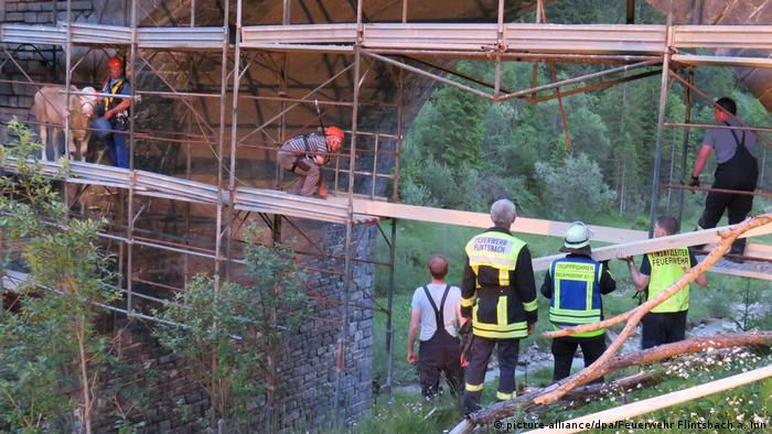 Firefighters look on as they secure the cow in Bavaria