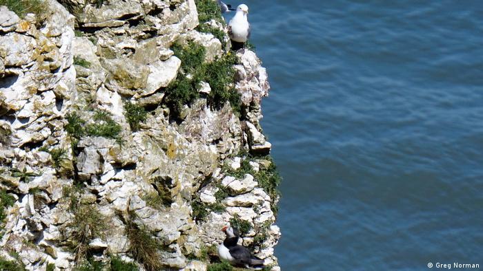 Vögel sitzen auf einem Felsen