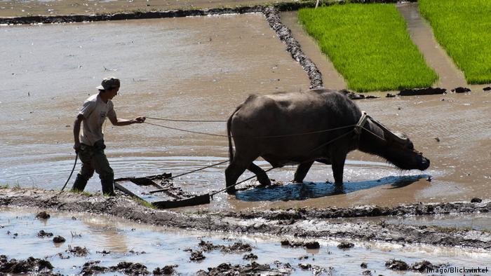 China Reisfeld Landwirt mit einem Wasserbüffel