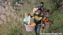 China Orangen Ernte in Rongjiang