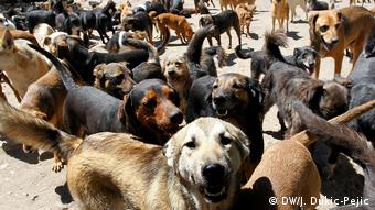 Приют для бездомных животных в Сербии