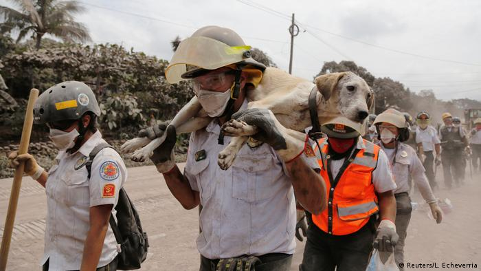 A firefighter carries a dog at an area affected by the eruption of the Fuego volcano (Reuters/L. Echeverria)