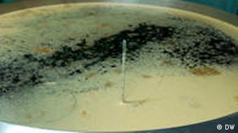 Bierbottich mit Braunem Schlawiner (Foto: DW)