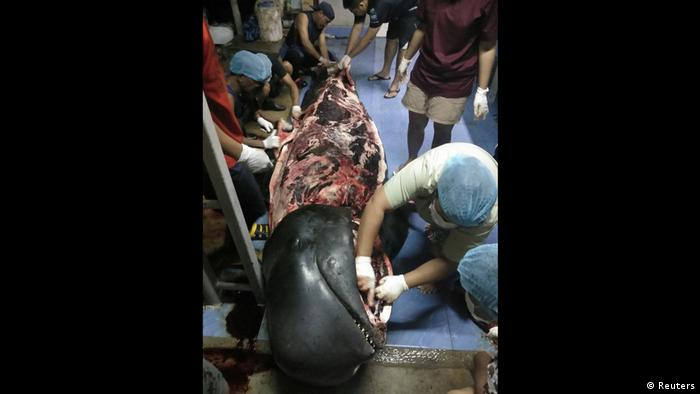 Thailand: dead whale being dissected