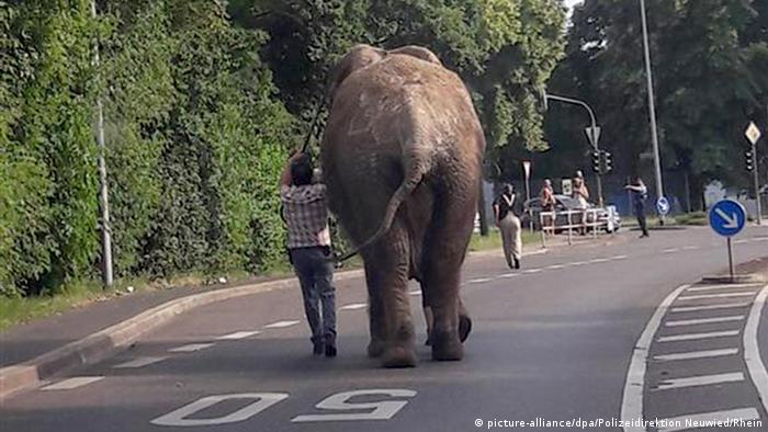 Elephant breaks out of circus in Germany and strolls through Neuwied (picture-alliance/dpa/Polizeidirektion Neuwied/Rhein)