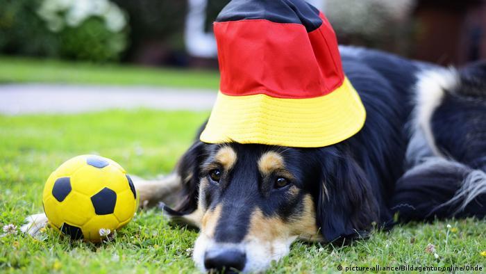 ЧМ по футболу – собака-фанат