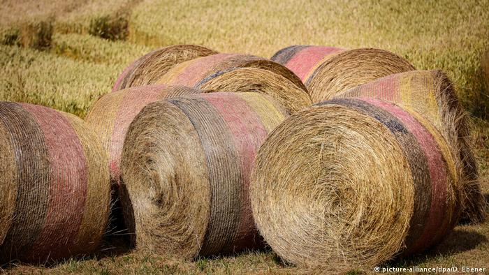 ЧМ по футболу – рулоны сена