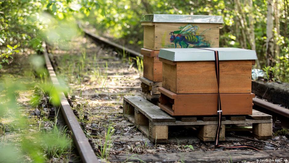 Bienenkästen auf alten Bahn-Flächen in Berlin