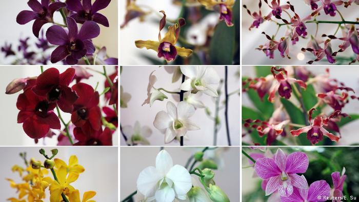 Orchideen im Botanischen Garten Singapur (Reuters/E. Su)