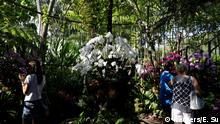 Visitors take photos of orchids at Singapore Botanic Gardens' National Orchid Garden June 6, 2018. REUTERS/Edgar Su