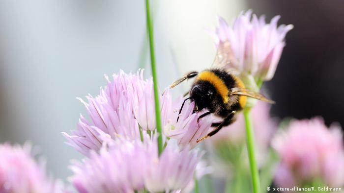 A bumble bee on a flower