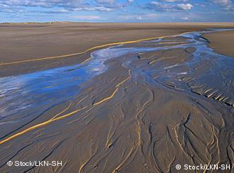 Germany's Wadden Sea mudflats named world heritage site | Germany| News and  in-depth reporting from Berlin and beyond | DW | 26.06.2009