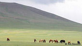 Horses on the plains of Mongolia