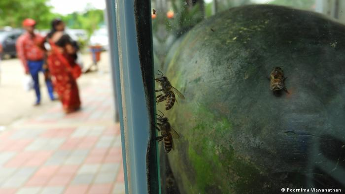Bees trapped in a case on a fruit stall (Source: Poornima Viswanathan)