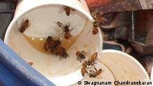 Dead bees in a paper cup (Source: Sivagnanam Chandrasekaran