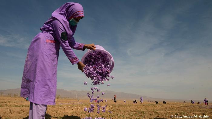 افغانستان میں زعفران کے کاروبار سے منسلک خواتین طالبان سے پریشان