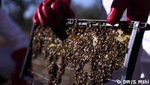 Global Ideas Bildergalerie Südafrika - Bienen und Elefanten