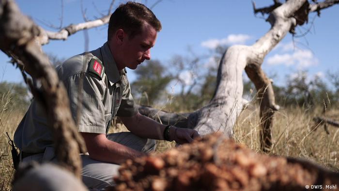 Global Ideas Bildergalerie Südafrika - Bienen und Elefanten (DW/S. Möhl)