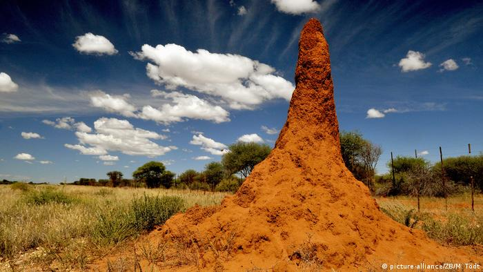 Termite builders in Namibia (picture-alliance/ZB/M. Tödt)
