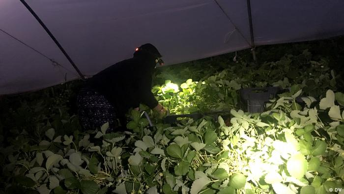 Spanien - Erdbeerfarm DWI Azzam