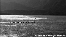 Nessie durchquert Lochness |