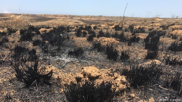 Burned fields in Israel