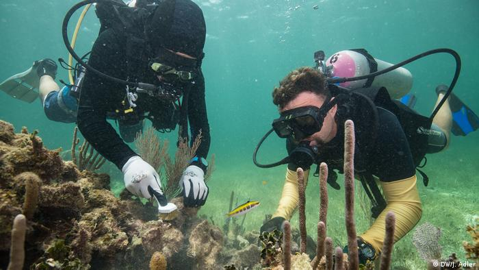 Divers clean coral reefs in Mexico with brushes (DW/J. Adler)