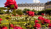 Rosengarten der Neuen Residenz, Altstadt von Bamberg