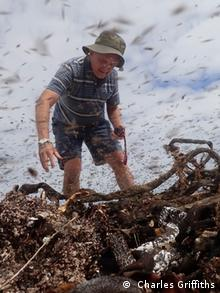 Kelp Südafrika Fliegen und Larven Maden