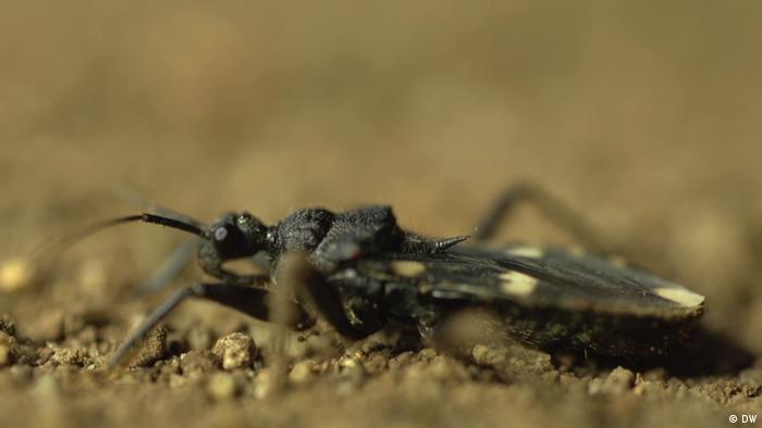 DW eco@africa - Insekten im Gorongos National Park