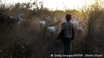 A boy walks with cattle