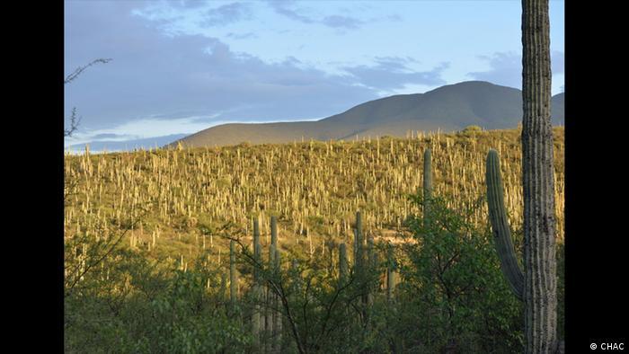 UNESCO World Heritage Nominierungen Welterbestätten 2018   Tehuacán-Cuicatlán Valley Mexiko (CHAC)