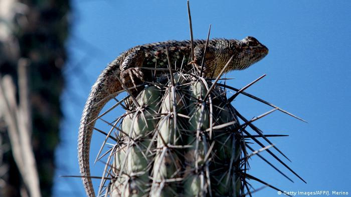 Mexiko Valle Tehuacan-Cuicatlan (Getty Images/AFP/J. Merino)