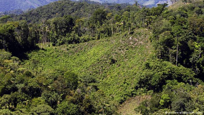 Ein Koka-Anbaugebiet in Kolumbien vom Berg aus betrachtet