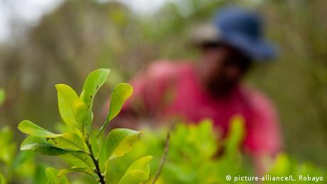 Kolumbien: Kampf gegen Anbau der Koka-Pflanze