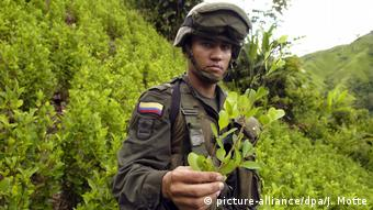 An anti-narcotic policeman holds up a coca plant in an illegal coca plantation (picture-alliance/dpa/J. Motte)