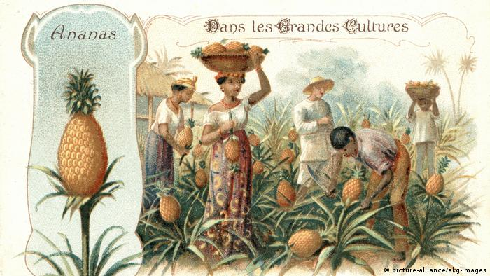 A poster from 1900 shows farmworkers picking pineapples (picture-alliance/akg-images)