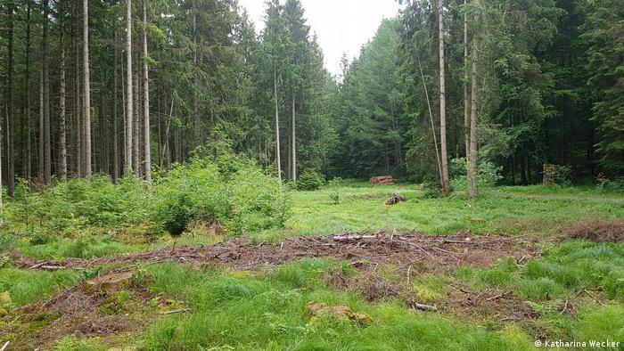 Foto: Ein Überblick über den Wald (Quelle: Katharina Wecker)