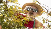 Neugieriger Nachbar mit Fernglas versteckt sich hinter der Hecke - curios neighbour with spyglas hides behind a hedge   Verwendung weltweit, Keine Weitergabe an Wiederverkäufer.