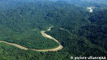 Nationalpark Gunung Leuser Sumatra Indonesien