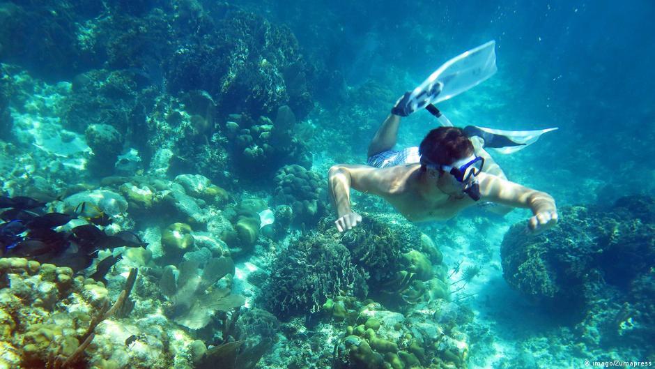 Nursing Belize's coral reef back to health