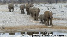 Zentralafrika: Manovo-Gounda St Floris National ParkAfrica, Old, young, plain, elephant, Etosha, Loxodonta africana, Namibia, steppe, animals, water hole,